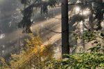 Bekenntnis zu besserer Forstwirtschaft