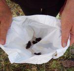 Auswilderung von Zwergfledermäusen am Hermelinweiher