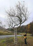 Obstbaumschnitt im Stettbacher Tal II