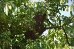 Artenreicher Wald mit blühenden Sträuchern