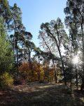 Welchen Wert hat unser Wald?