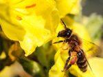 """Erfahrungsaustausch Naturbeobachtung - Vortrag: """"Mein Naturgarten, ein Paradies für Mensch und Tier"""""""