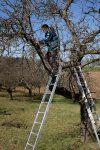 Hochstamm Obstbaumschnittkurs 2019