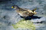 Wertvolles Vogelparadies
