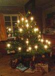 Weihnachtsbäume aus Ökoanbau oder heimischen Wäldern kaufen