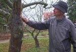 Abschluss der NABU-Baumschnittkurses