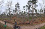Verbiss-Schutz für den Plant for the Planet-Wald am Seeheimer Waldfriedhof