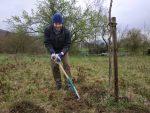 Frühjahrsarbeiten im Kirschgarten