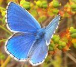 Tag der Artenvielfalt 2020 – am 22. Mai an dieser Stelle Digital