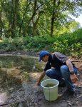 Wasserpflanzen für den Schöntalteich