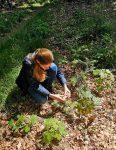 Weißtannen-Schutz am Melibokus