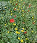 Pflegeeinsatz am Malchener Blütenhang