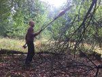 Pflegeübernahme für Streuobstwiese im Gemeindewald