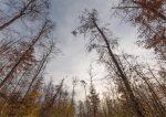 Waldzustandsbericht Hessen 2020 erneut alarmierend