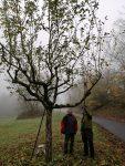 Pflege der Obstbäume im Stettbacher Tal