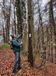 Nistkastenpflege im Wald bei Alsbach I