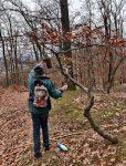 Nistkastenpflege im Wald bei Alsbach II