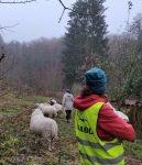 NABU-Schafe im Winterlager