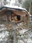 Winterfütterung der Vögel im Bickenbacher Wald