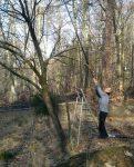 Obstbaumschnitt Waldwiese am Langen Berg
