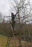 Obstbaumschnitt im NABU-Gelände am Seeheimer Blütenhang