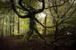 Heute ist Internationaler Tag des Waldes