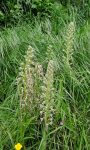 Naturerlebnis am Seeheimer Blütenhang