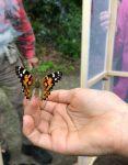 Freiheit für Schmetterlinge