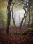 Tag der Buchenwälder: Offener Brief an Landwirtschafts- und Umweltministerien