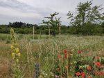 Blütenpracht auf den Trockenwiesen