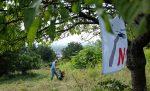 Mahd der Orchideenwiesen am Seeheimer Blütenhang II