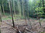 Zaun ins Käferloch: Naturverjüngung im Wald fördern
