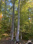 Waldkunstpfad Darmstadt: Petition und Impressionen