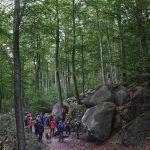 Zweite Waldexkursion am Felsberg