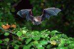 Bat-Night am Waldweiher