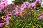 Schmetterlinge im herbstlichen Garten