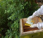 Kurzzeit-Behandlung mit Ameisensäure