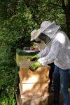 Langzeit-Behandlung mit Ameisensäure