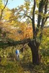 Baumfällung am NABU-Grundstück I
