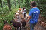 Schafwanderung mit NAJUs