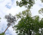 Waldschäden zwischen Pfungstadt und Bickenbach