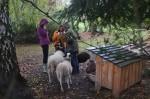 Die Schafe ziehen ins Winterquartier