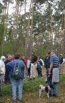 Wald-Weide und Wald-Orchideen