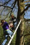 Die Feuersalamander bringen Vogel-Nisthilfen auf die Etzwiesen
