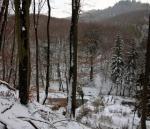 Schafjäger im Winterwald