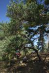 NABU Arbeitseinsatz an der Düne Neben Schenkenäckern