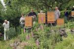 Honigschleudern bei den Wühlmäusen