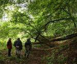 Projektstart: Neuer Wanderweg zu den Feuchtwiesen am Beerbach