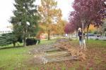 Hochstamm-Aktion in Seeheim
