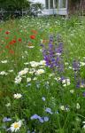 Bunte Blumenwiese im Vorgarten
